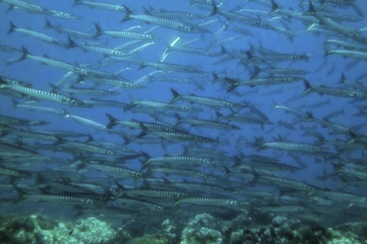 Corso Specialty Diver